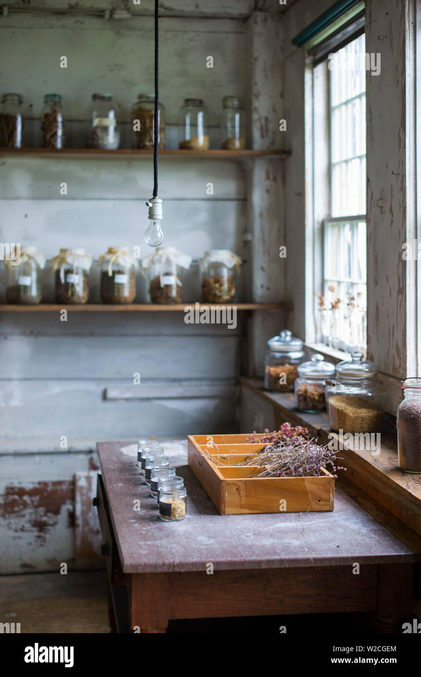 USA, New Hampshire, Canterbury, Canterbury Shaker Village, former Shaker religious community, herbs Stock Photo