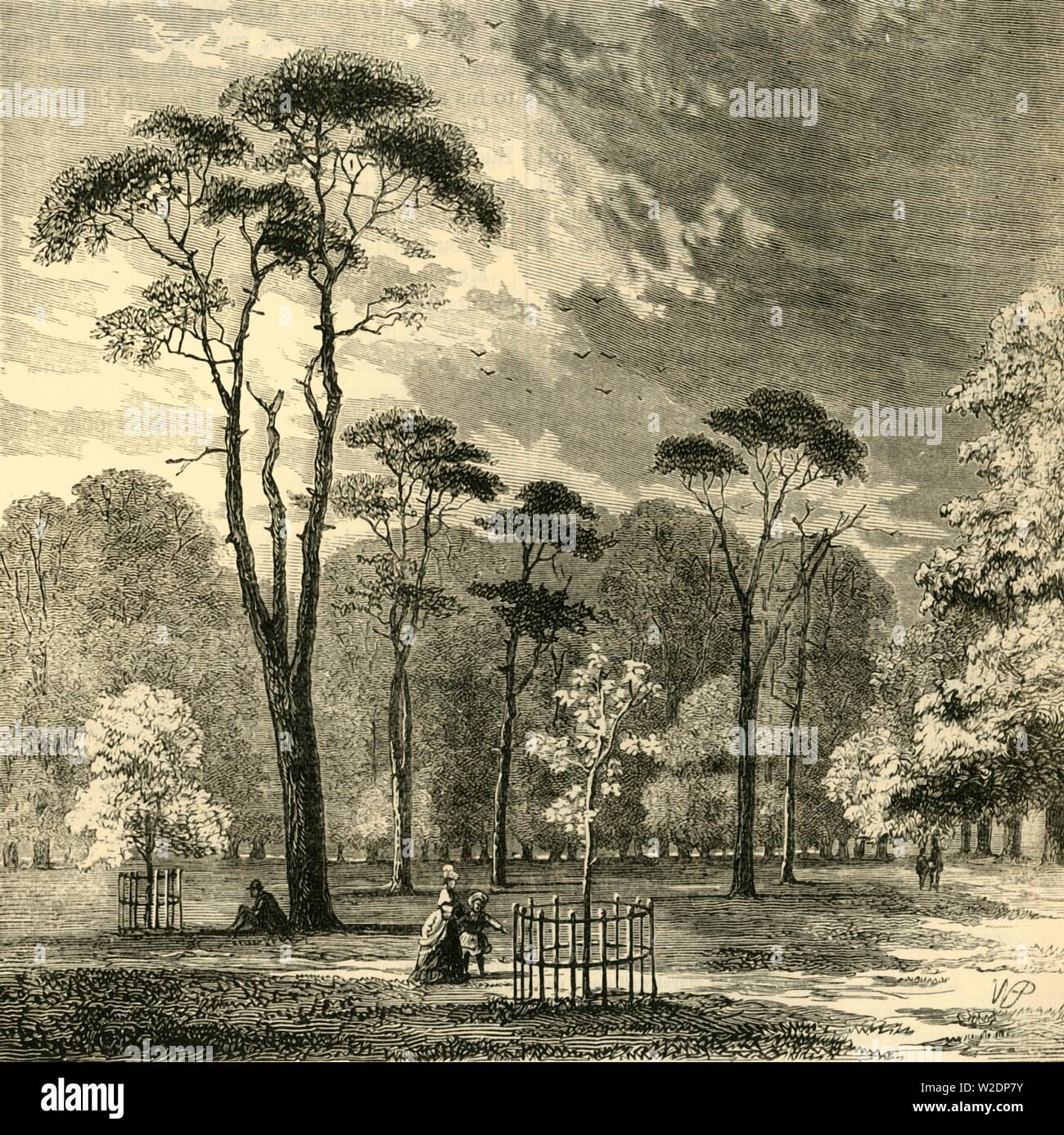 """'The Scotch Firs, Kensington Gardens', c1876. Scots pines grow in Kensington Gardens, once private gardens of Kensington Palace,, originally created by Henry VIII in 1536 for use as a hunting ground,  Queen Caroline requested they be separated from Hyde Park in 1728.  From """"Old and New London: A Narrative of Its History, Its People, and Its Places. The Western and Northern Studies"""", by Edward Walford. [Cassell, Petter, Galpin & Co., London, Paris & New York] - Stock Image"""