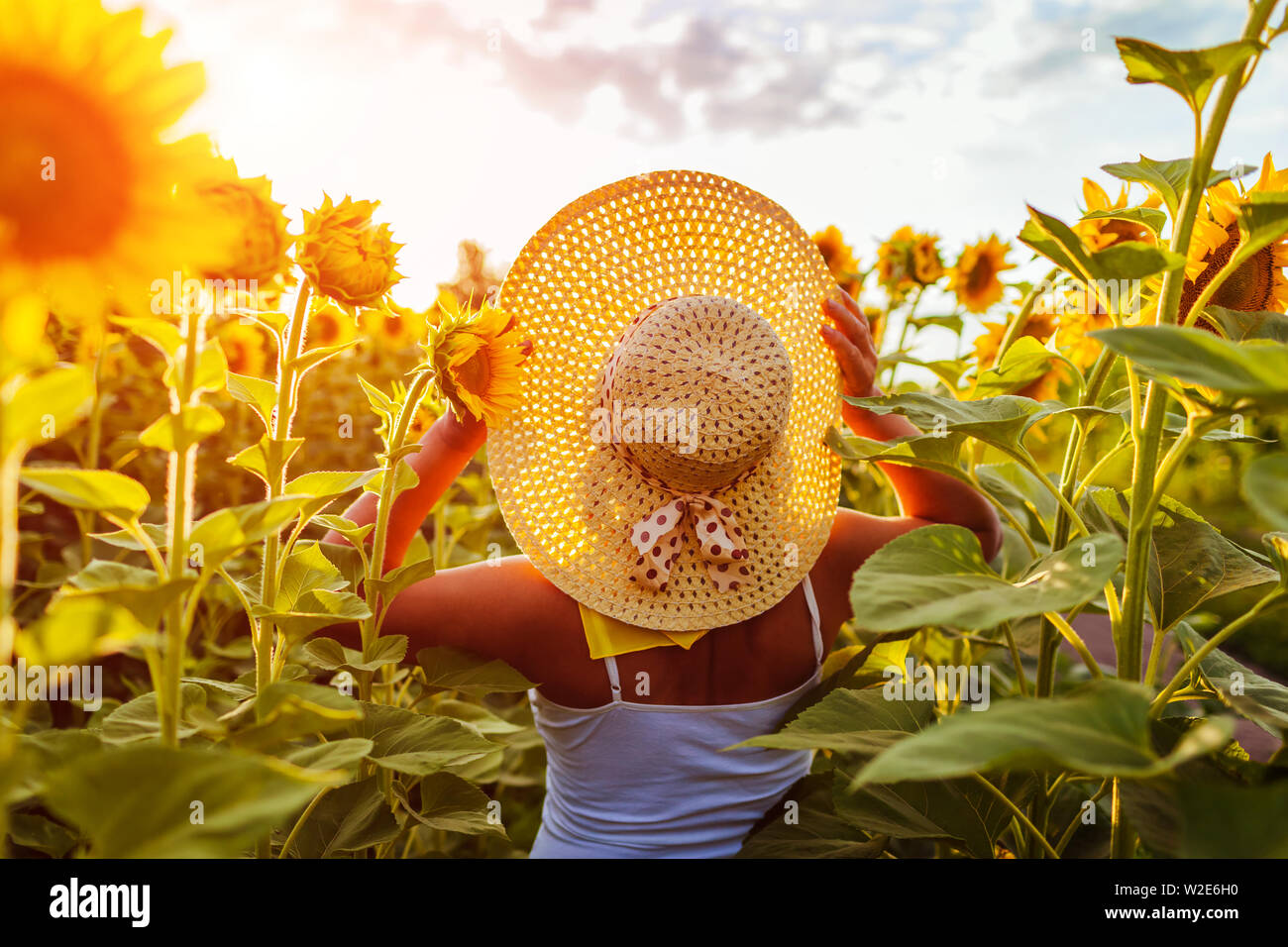 Senior woman walking in blooming sunflower field holding hat and admiring view. Summer vacation Stock Photo