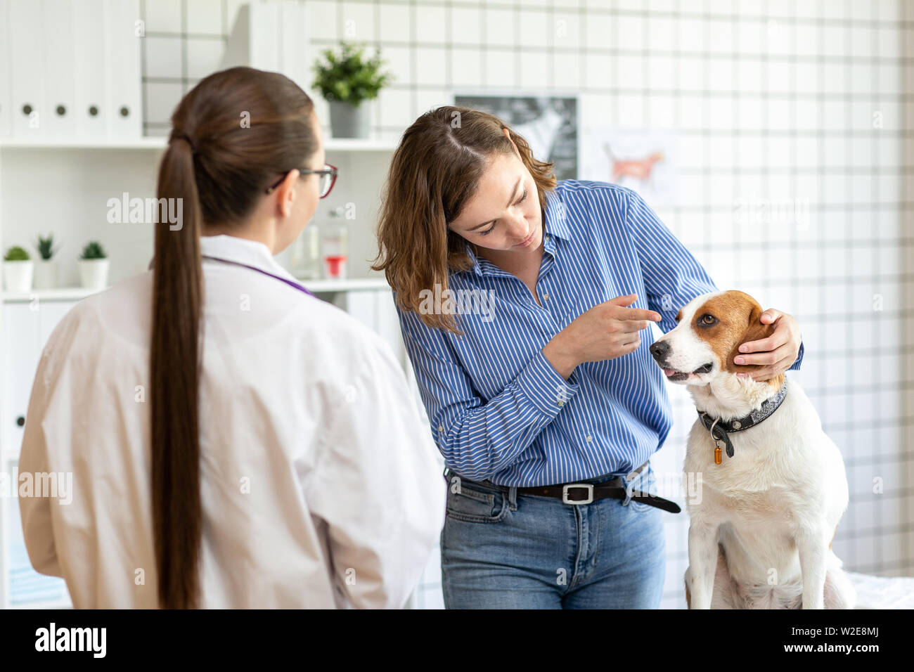 The veterinarian and the client with the dog to discuss the treatment in a veterinary clinic. Stock Photo