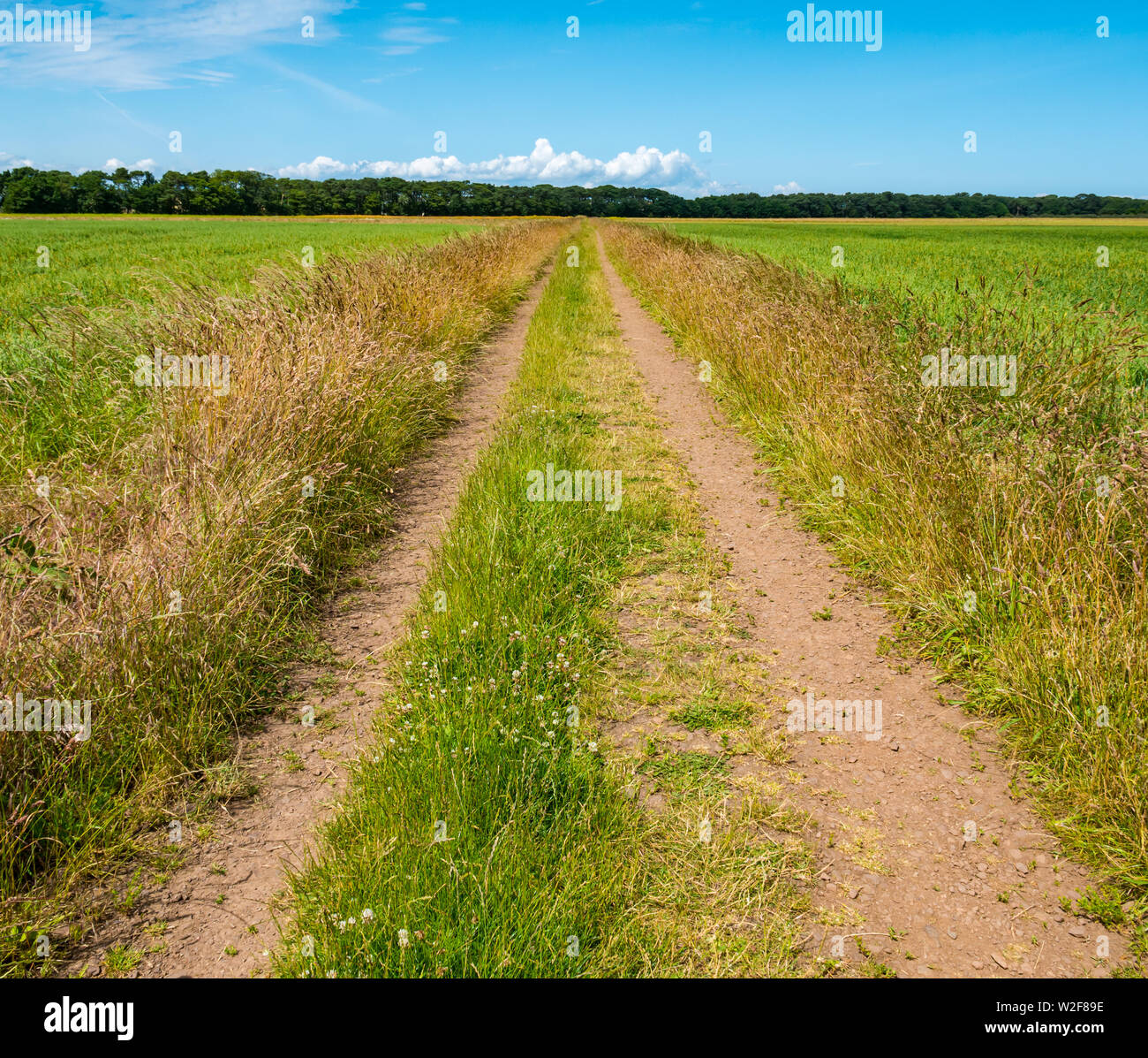 Straight track leading into distance to nowhere thorugh grassy Summer field on sunny day, East Lothian, Scotland, Uk - Stock Image