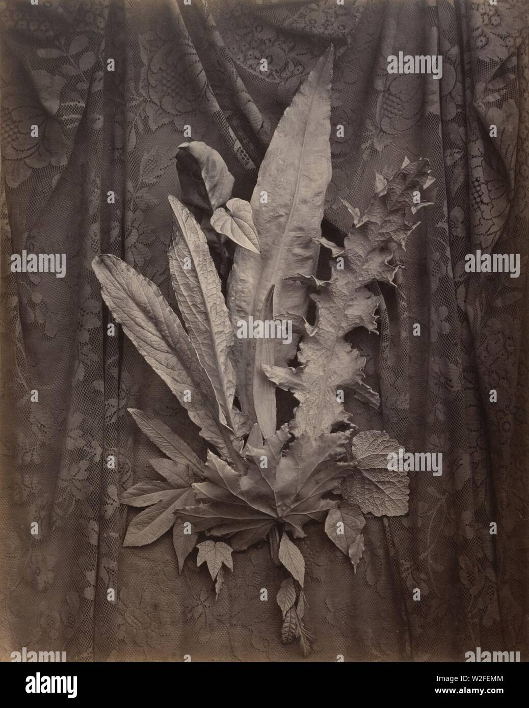Charles Aubry (French - An Arrangement of Tobacco Leaves and Grass - - Stock Image