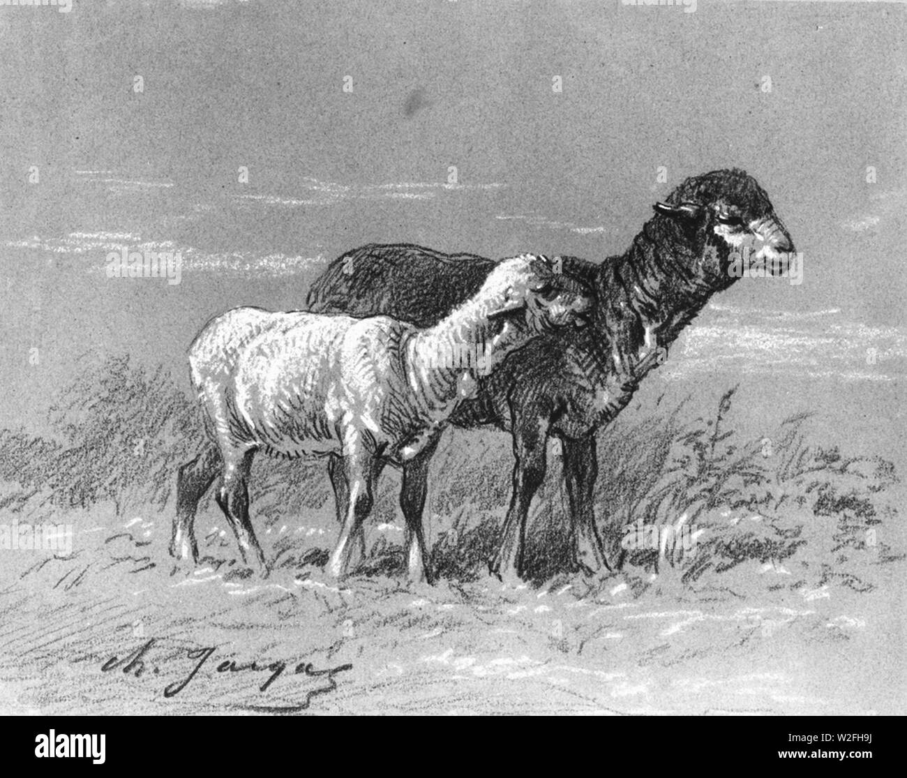 Charles Émile Jacque - Ewe and Lamb - Walters 371619. - Stock Image