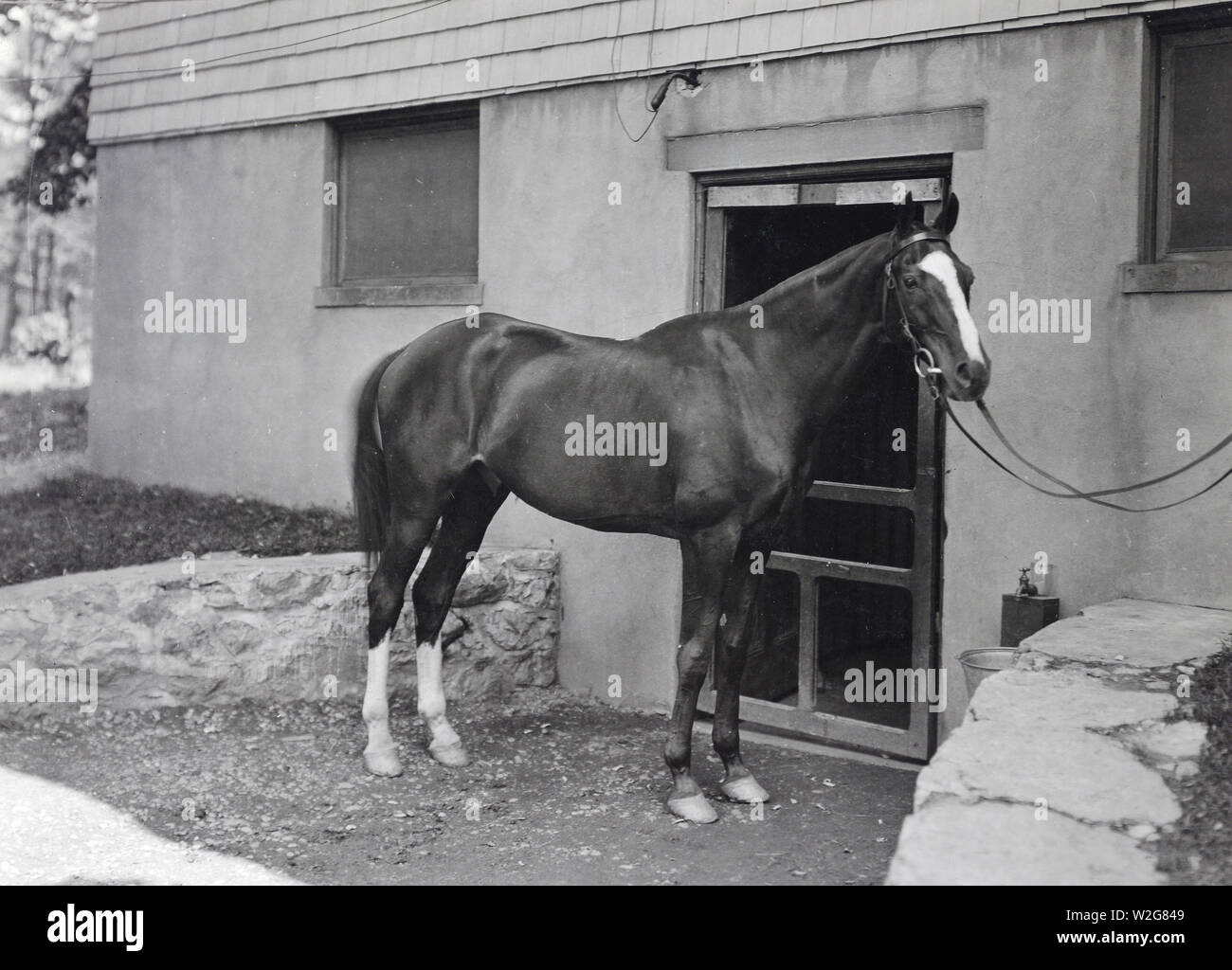 Kidron (French gelding) was selected for United States Government by Colonel John G. Quekemeyer, A.D.C. to General John J. Pershing, and later was purchased from the United States Government for General John J. Pershing. Ridden in the Paris Peace Parade by General John J. Pershing. Returned to the United States with G.H.Q. Stables, September 1919 - Stock Image