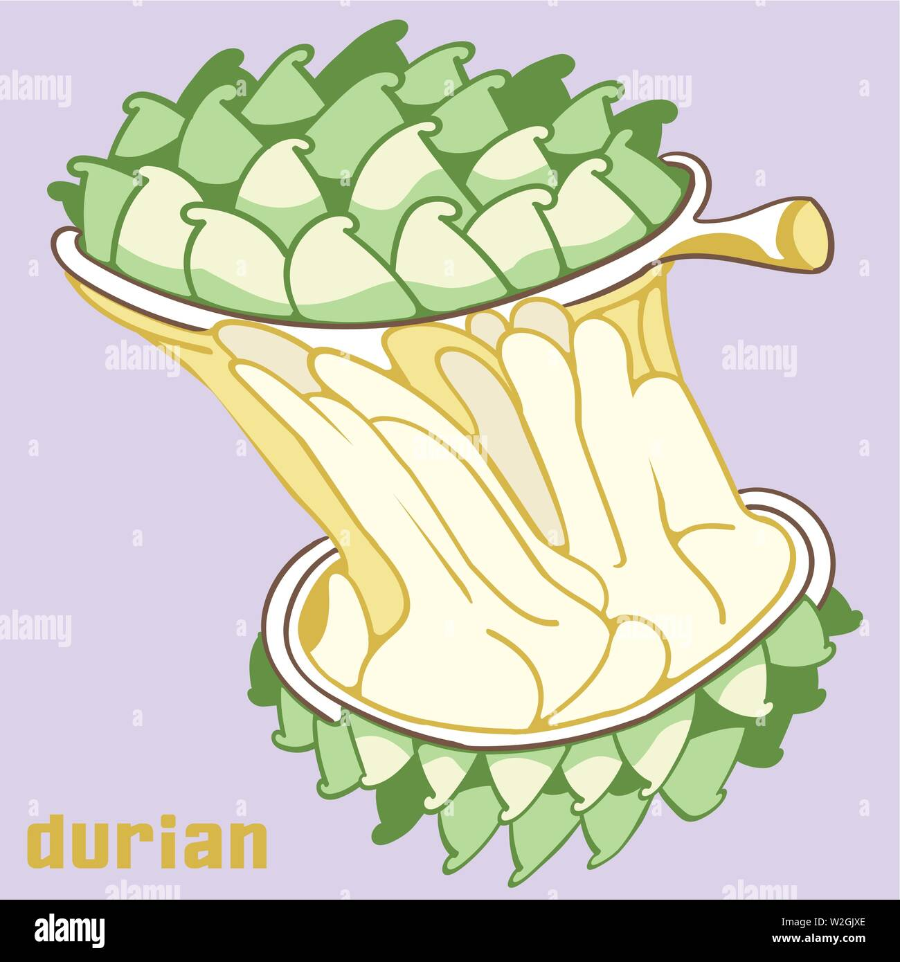 Stretching durian like chewing gum , organic tropical fruit. - Stock Vector