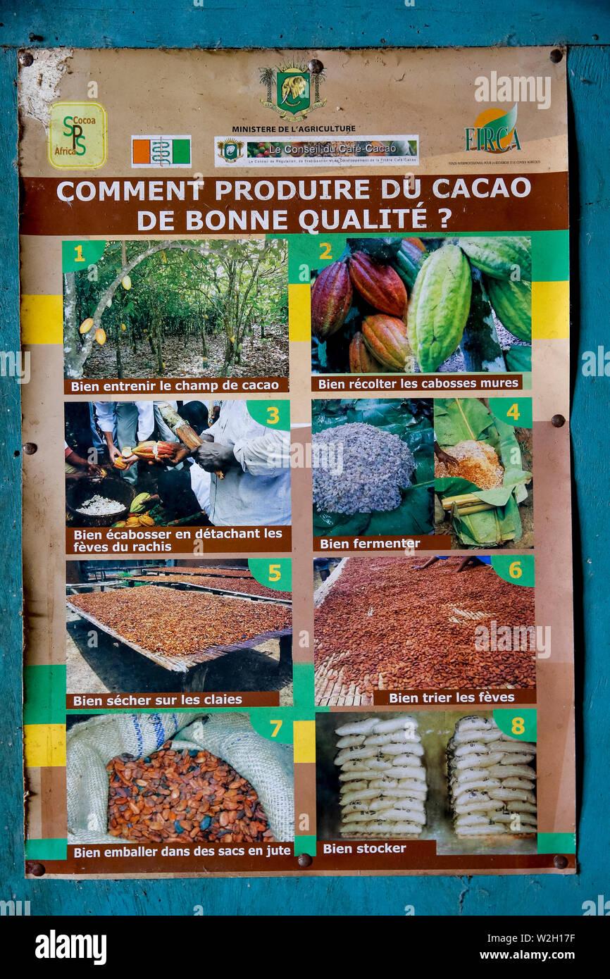 Ivory Coast Cocoa Not Cacao Stock Photos & Ivory Coast Cocoa Not