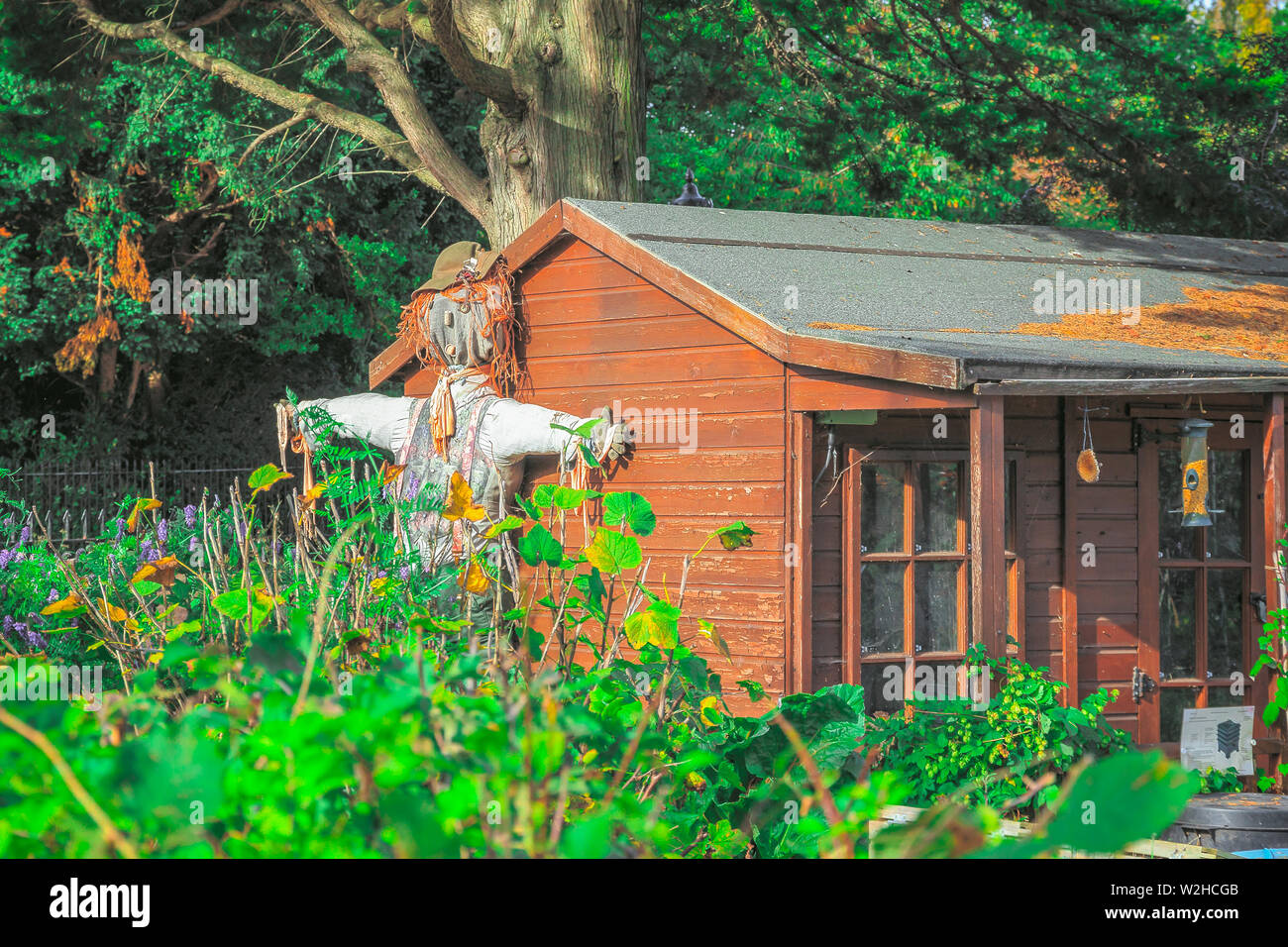 Scarecrow displayed outside a cabin in Regent's Park Allotment Garden of London, a food garden featuring a wide range of fruits and vegetables - Stock Image