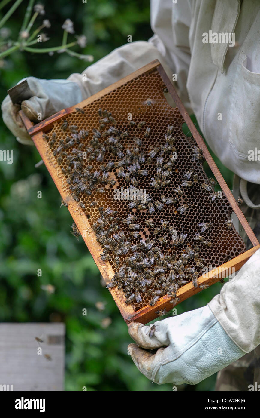 Bee keeping Stock Photo