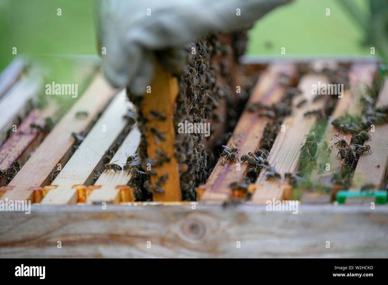 Bee keeping Stock Photo