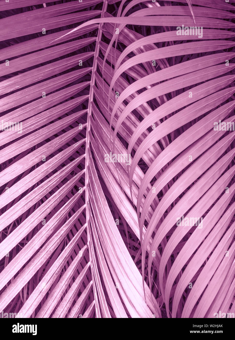 Tropic leaves in light pastel pink color Stock Photo