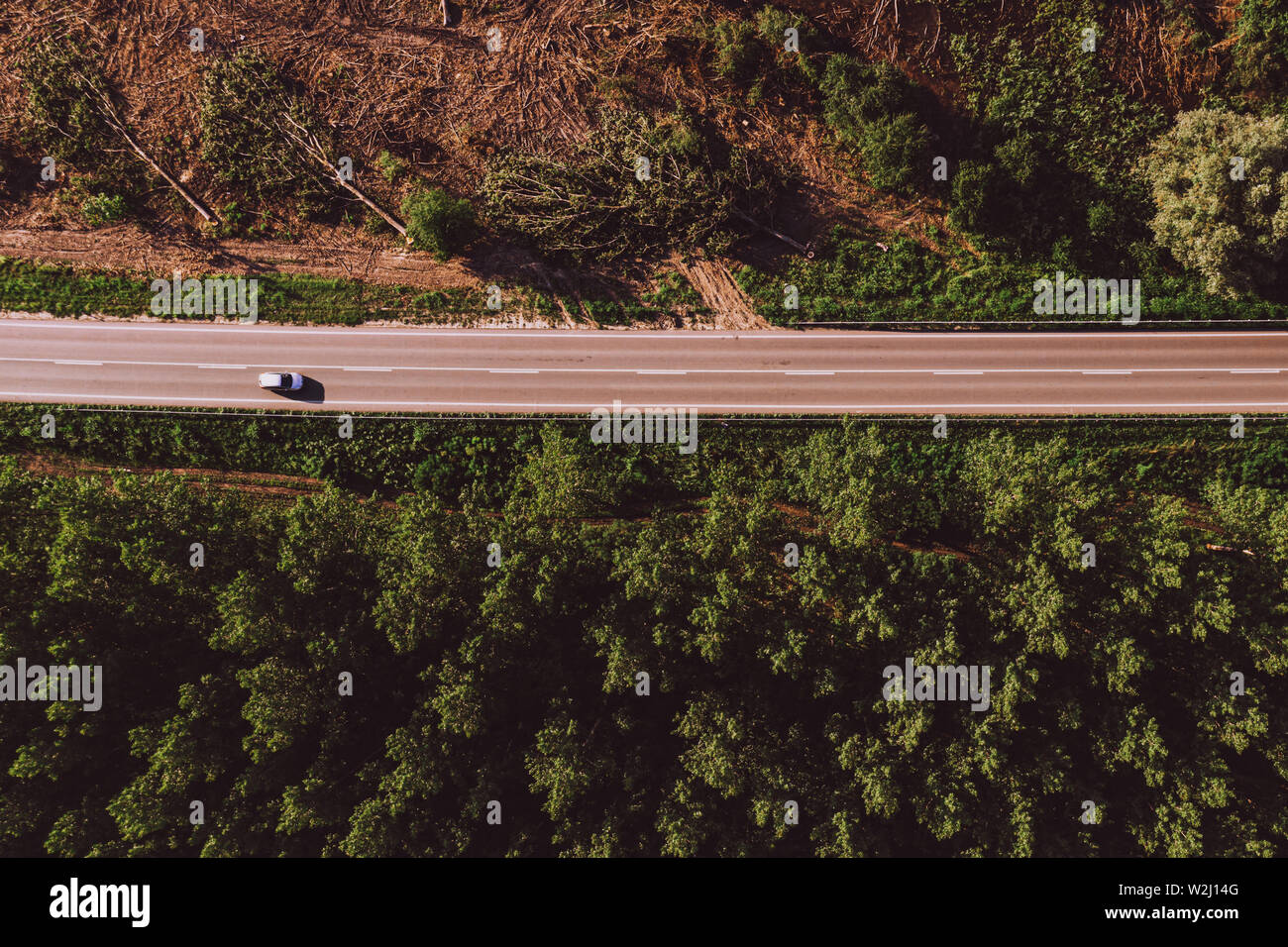 Aerial view of single white car on road through forest region with large cottonwood trees in summer afternoon Stock Photo