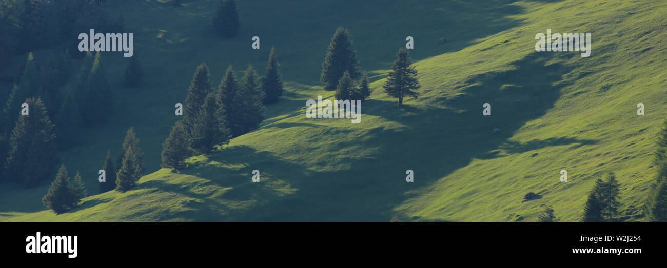 Green landscape in the Canton of Grisons, Switzerland. Forest in Obermutten. - Stock Image