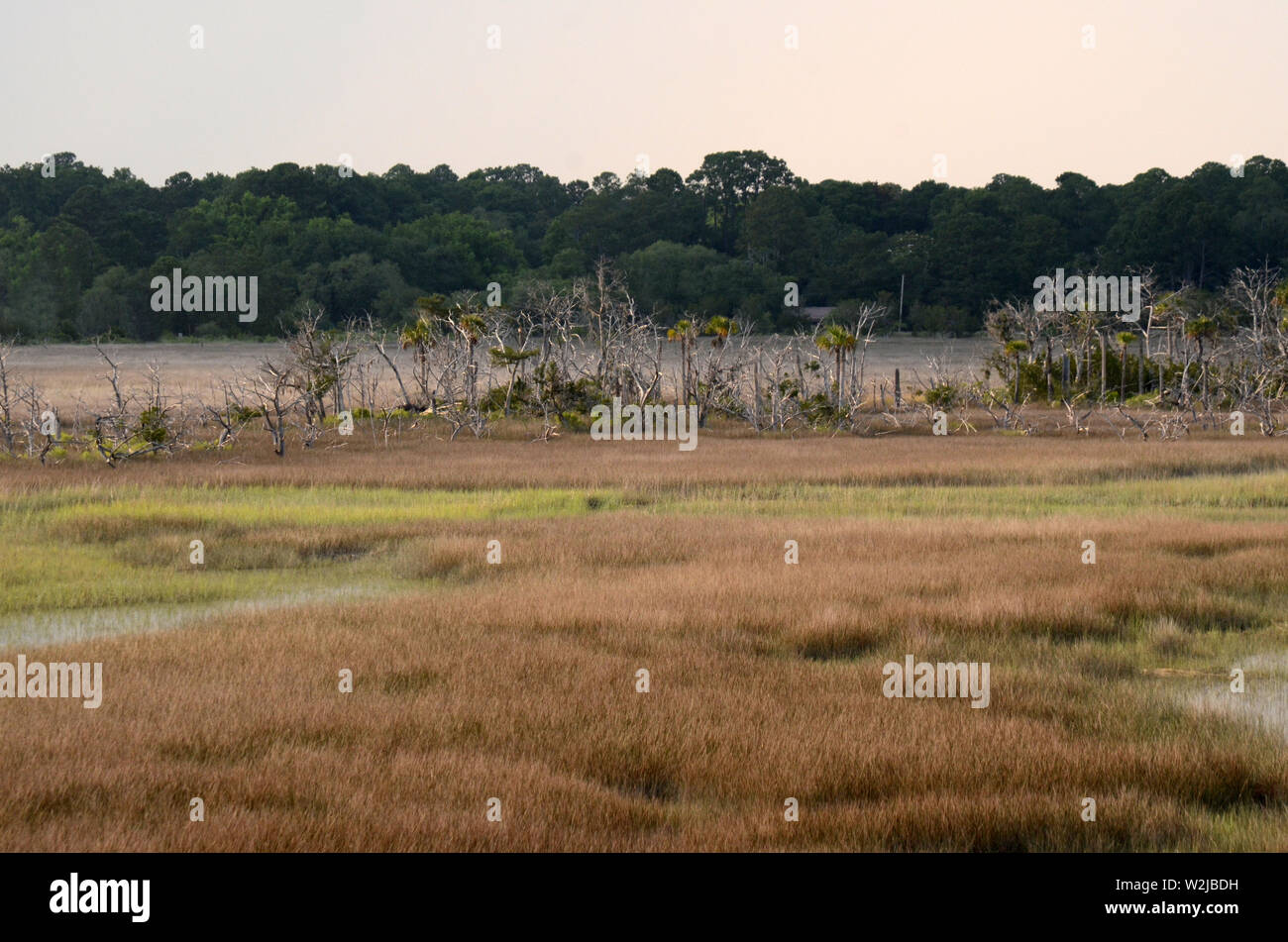DEADWOOD VALLEY Swampland and marshes filled with patches of petrified trees is a scene very common in beautifully scenic Savannah, Georgia. - Stock Image
