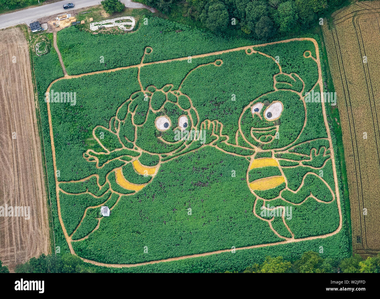 Utting am Ammersee, Bavaria, Germany. 9th July 2019. The aerial photograph shows a cultivated plant field on the shore of the Upper Bavarian Ammersee lake, in which the farmers Corinne and Uli Ernst and their 20-strong team have worked in a maze with the outlines of Maya the Bee and her friend Willi. A bee-friendly plant mixture of sunflowers, hemp, maize, wild mallow, ornamental pumpkins, beans, wild wine and hops was sown in April. Credit: dpa picture alliance/Alamy Live News - Stock Image