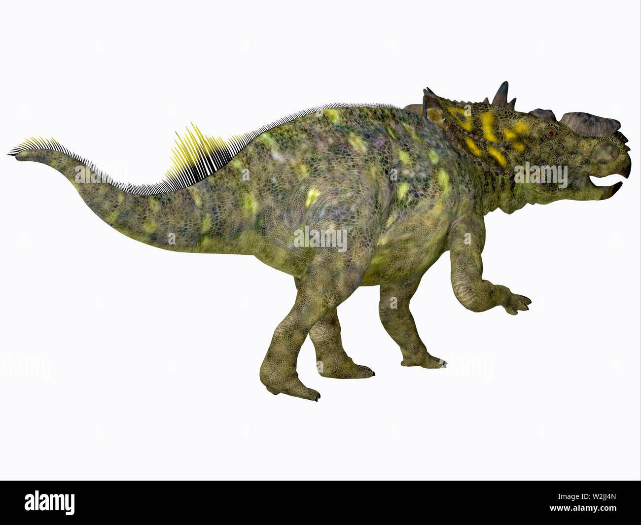 Pachyrhinosaurus Dinosaur - Pachyrhinosaurus was a Ceratopsian herbivorous beaked dinosaur that lived in Alberta, Canada during the Cretaceous Period. Stock Photo