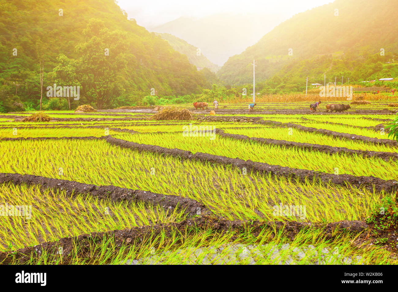 Beautiful Asian Landscape With Bright Colors Green Plants And Sunshine Stock Photo Alamy