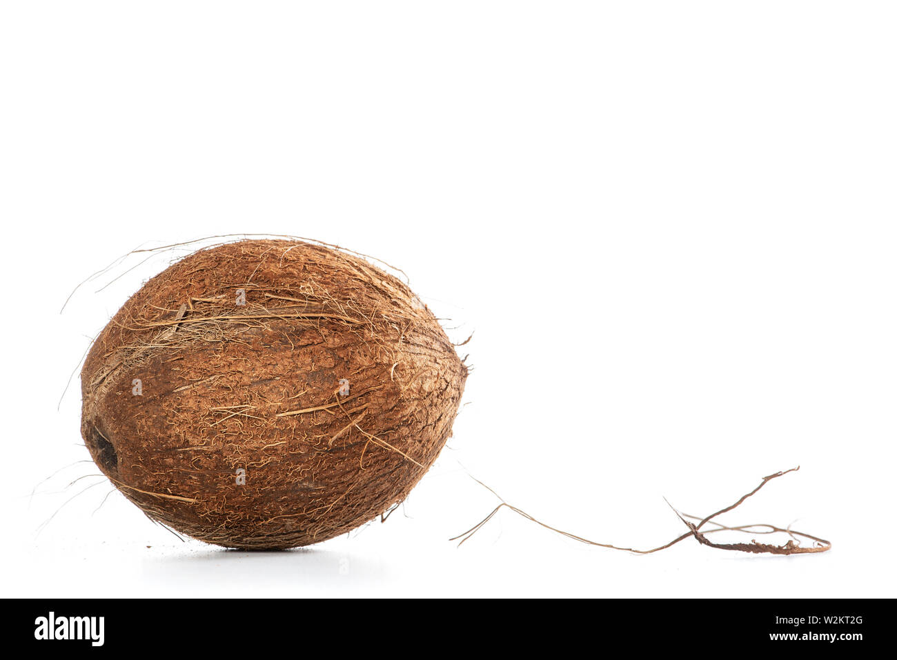 Dominican coconut on white background, with copy space for text Stock Photo