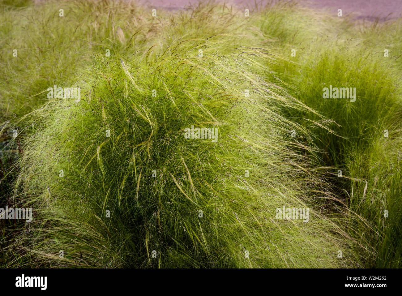 Ornamental Grasses Parc De La Tete D Or Or Park Of The Golden