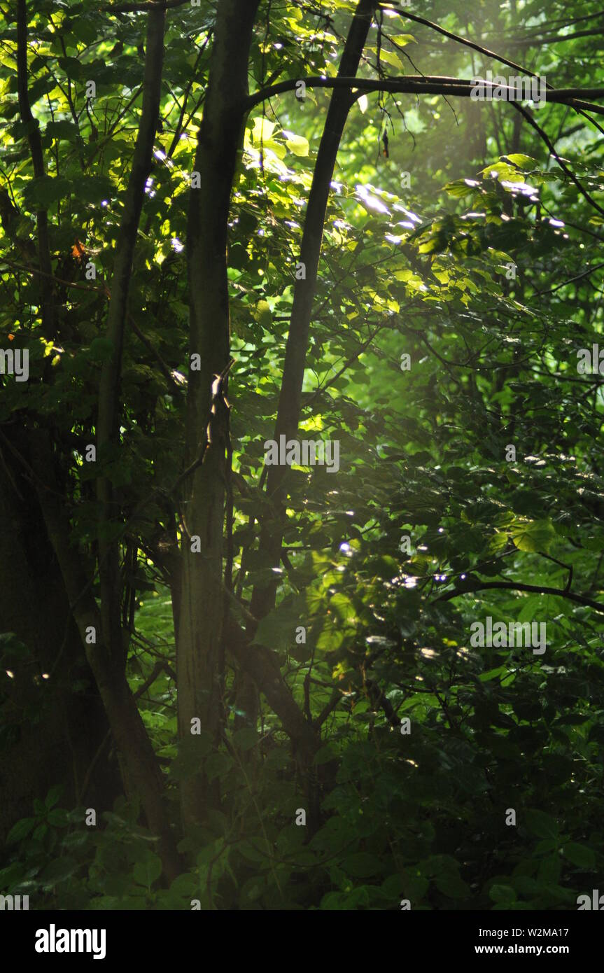 The Sun S Rays Penetrate To The Forest Floor Stock Photo