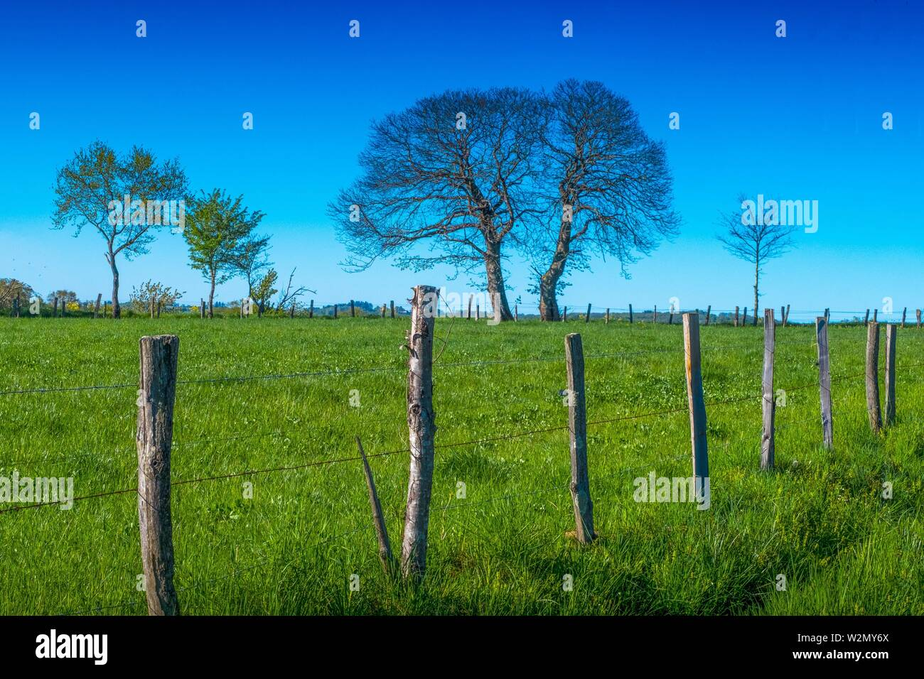 France, Auvergne, Cantal, Landscape in spring , near Parlan. Stock Photo