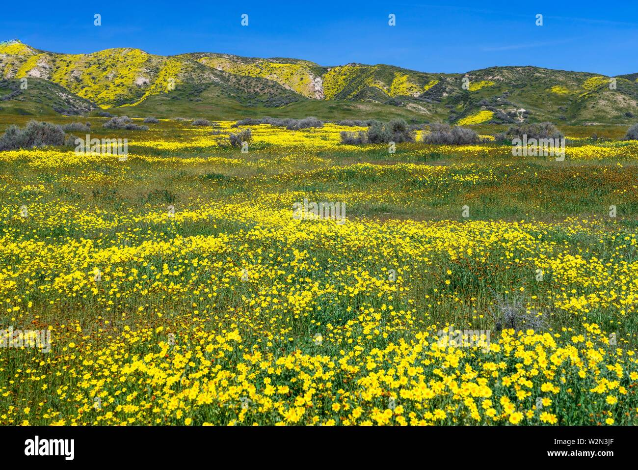 The Carizzo Plain National Monument with wildflowers of the 2019 Superbloom, California, USA. - Stock Image