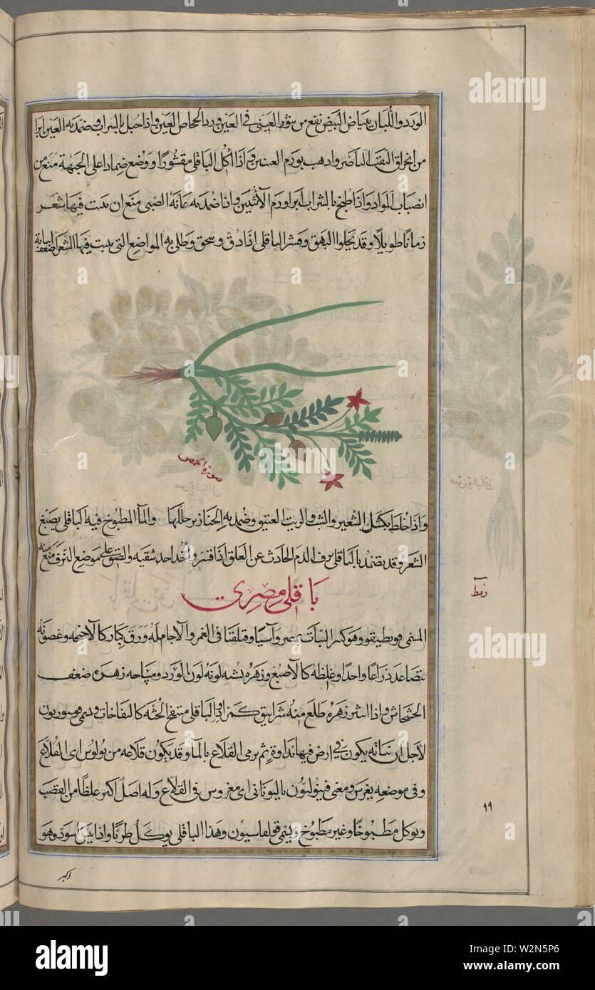 Cultivated chickpea (Cicer arietinum), al-himmas al-bustânî, fol