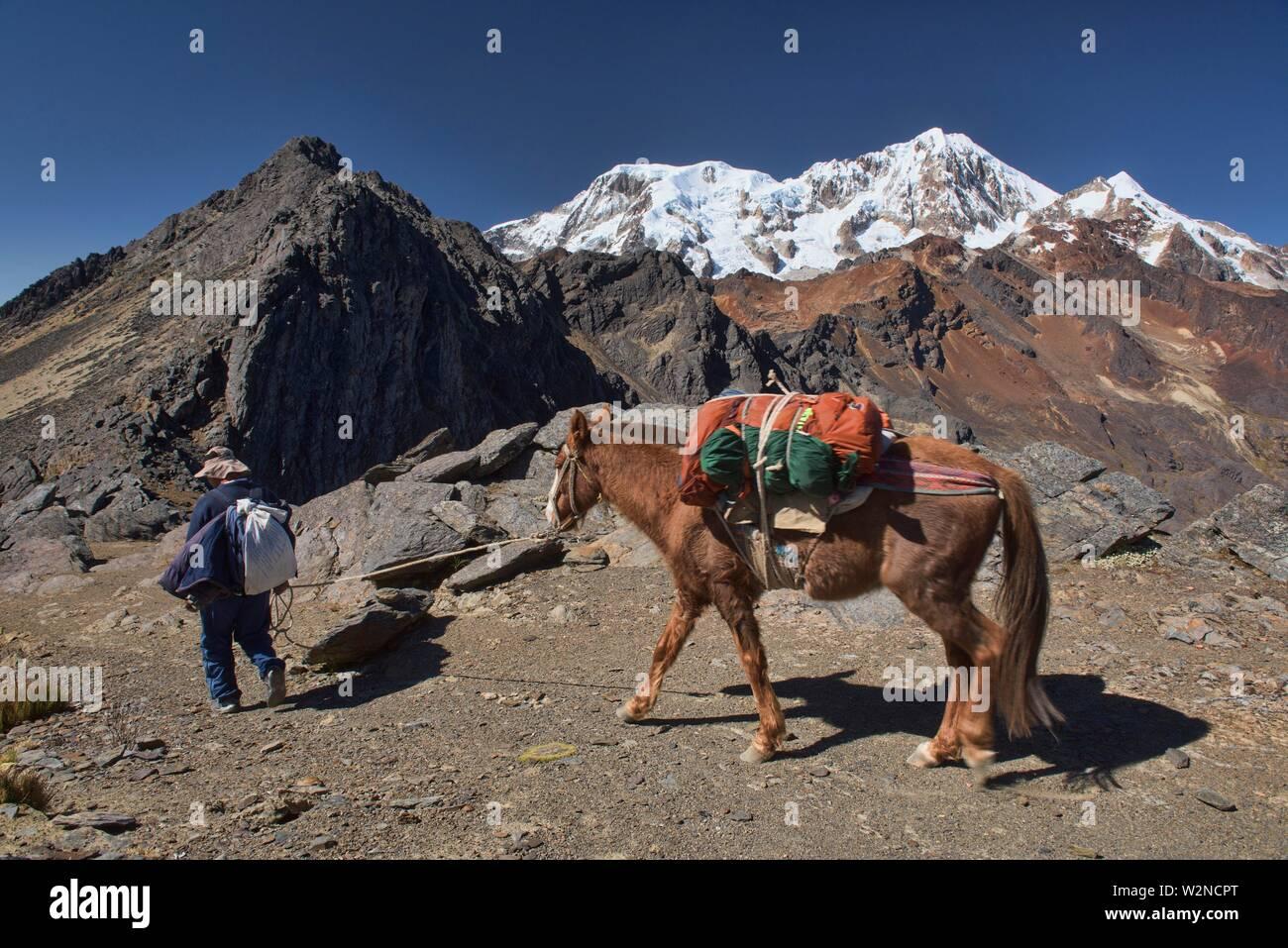 Arriero and mule crossing the Abra Illampu Pass, Cordillera Real Traverse, Bolivia. - Stock Image