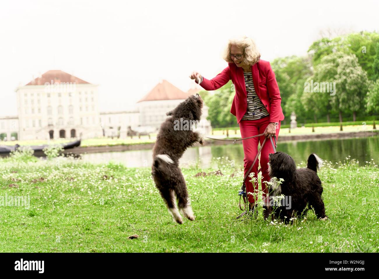 senior woman playing with her dogs in park, in Nymphenburg, Munich, Germany. - Stock Image
