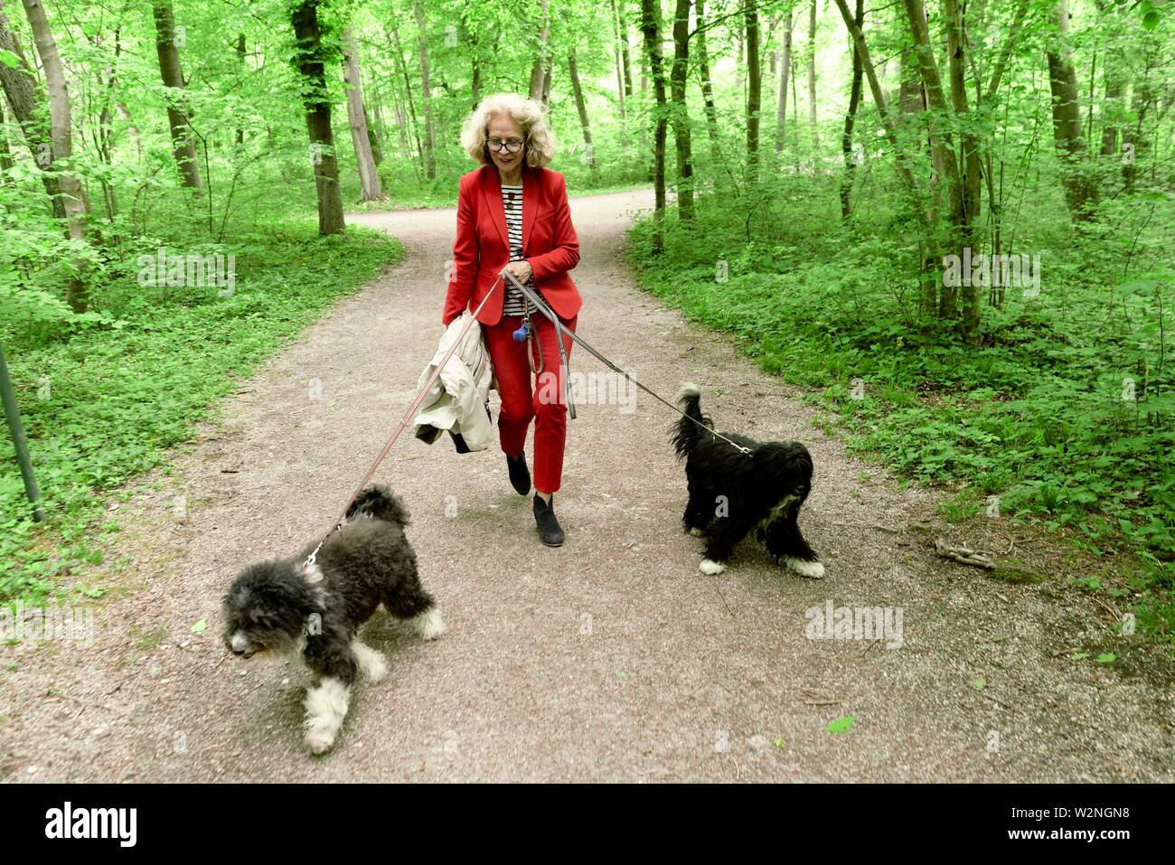 senior woman (67 years old) walking with two dogs on leash in forest, in Nymphenburg, Munich, Germany. - Stock Image