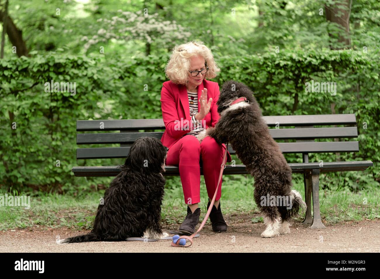 senior woman (67 years old) sitting on bench with dogs in park, in Nymphenburg, Munich, Germany. - Stock Image