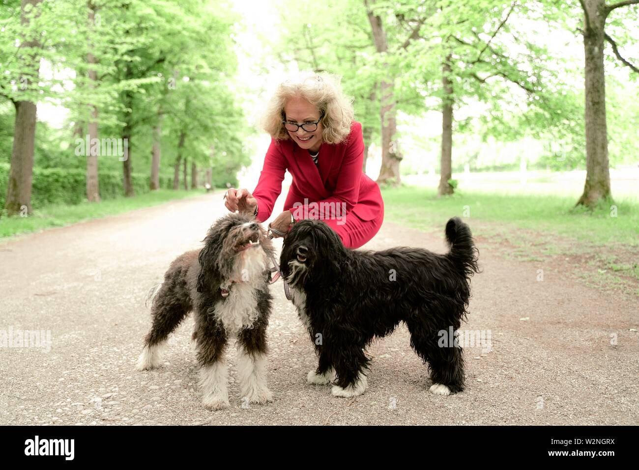 senior woman (67 years old) stroking her two dogs in park, in Nymphenburg, Munich, Germany. - Stock Image