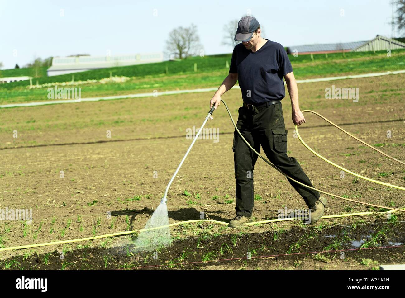 farmer watering young plants on field with hosepipe, in Bavaria, Germany Stock Photo