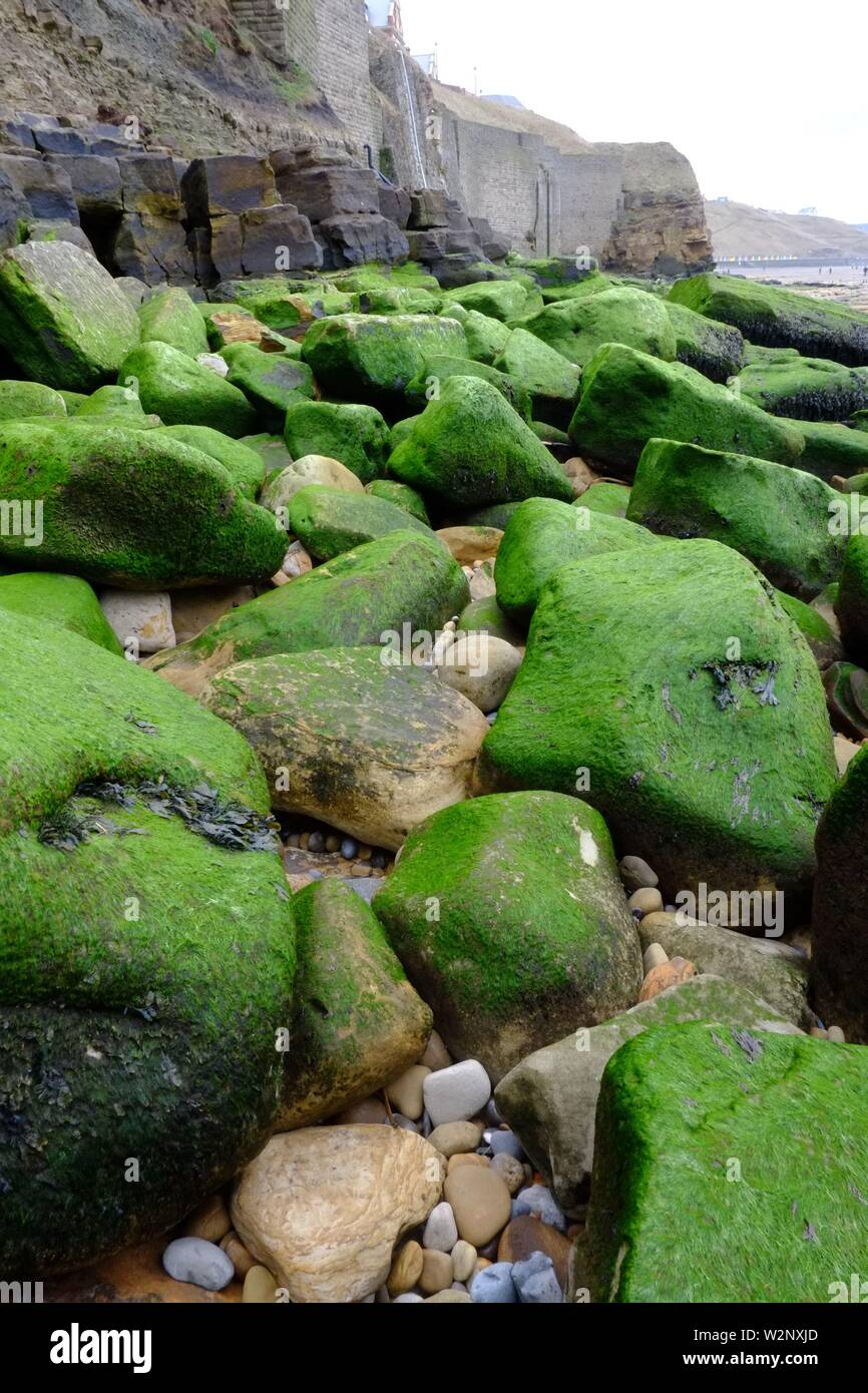 Whitby England A walk on the beach I notice a long stretch of large algae covered boulders.green in colour and very photogenic Stock Photo