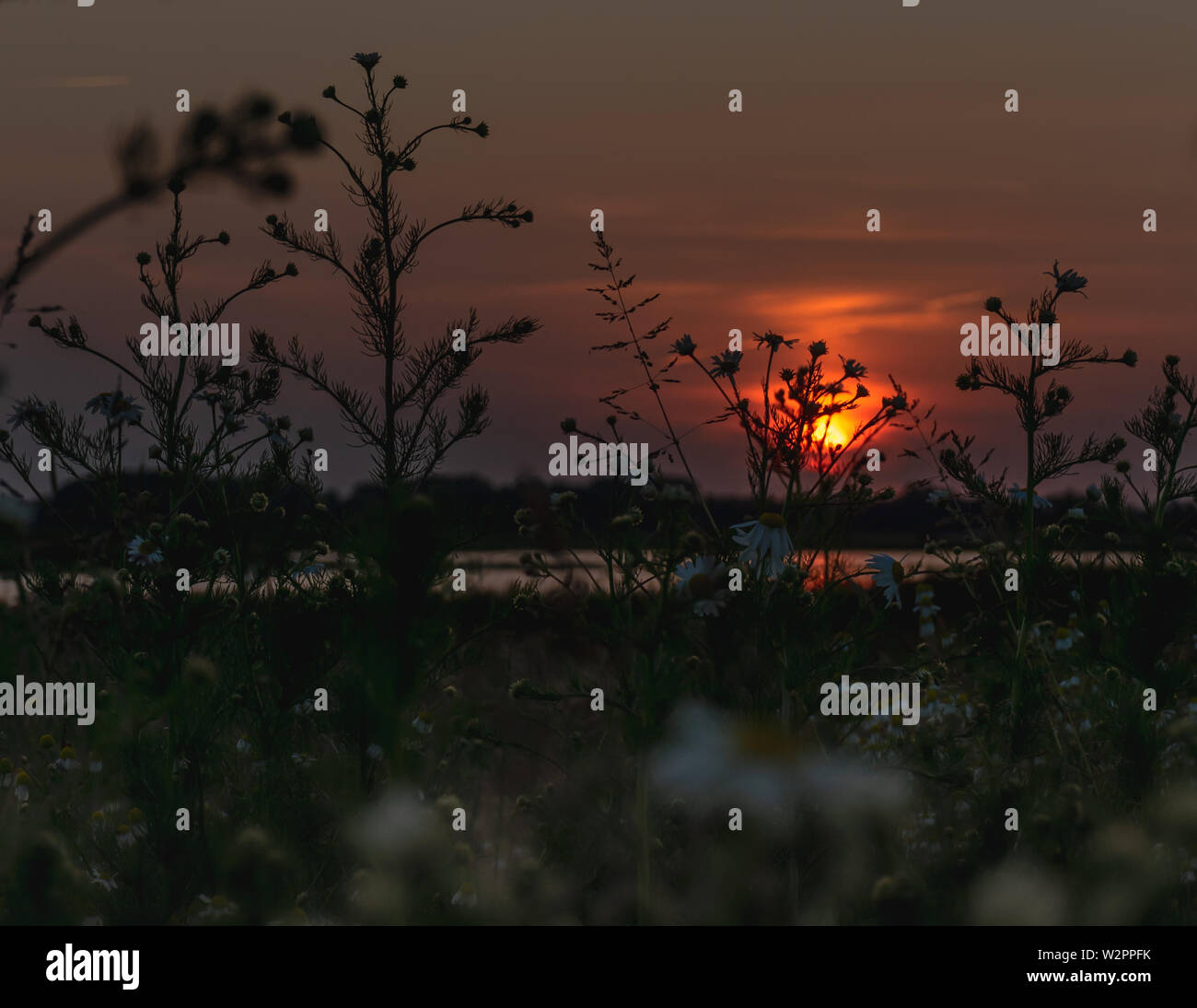 Mystical evening panorama of sun setting over the field . The Netherlands countryside in the summertime - Stock Image