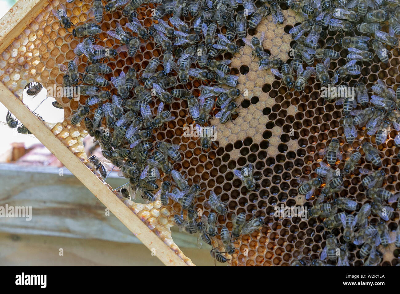 Beekeeping Stock Photo