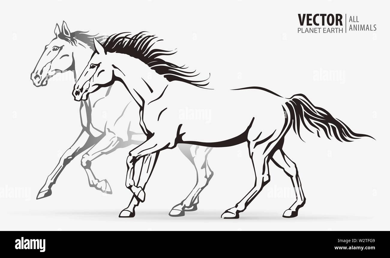Beautiful Arabian Horses Silhouettes Of A Running Horses Galloping Animal Sport Vector Illustration Stock Vector Image Art Alamy