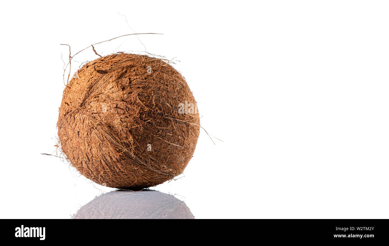 Coconut on white background with reflection, copy space for text Stock Photo