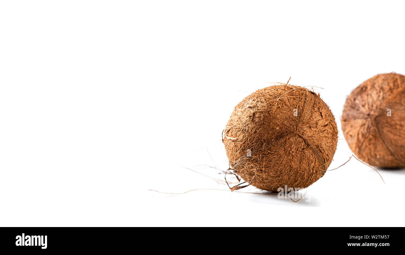 Two hairy coconuts on white background, copy space for text Stock Photo
