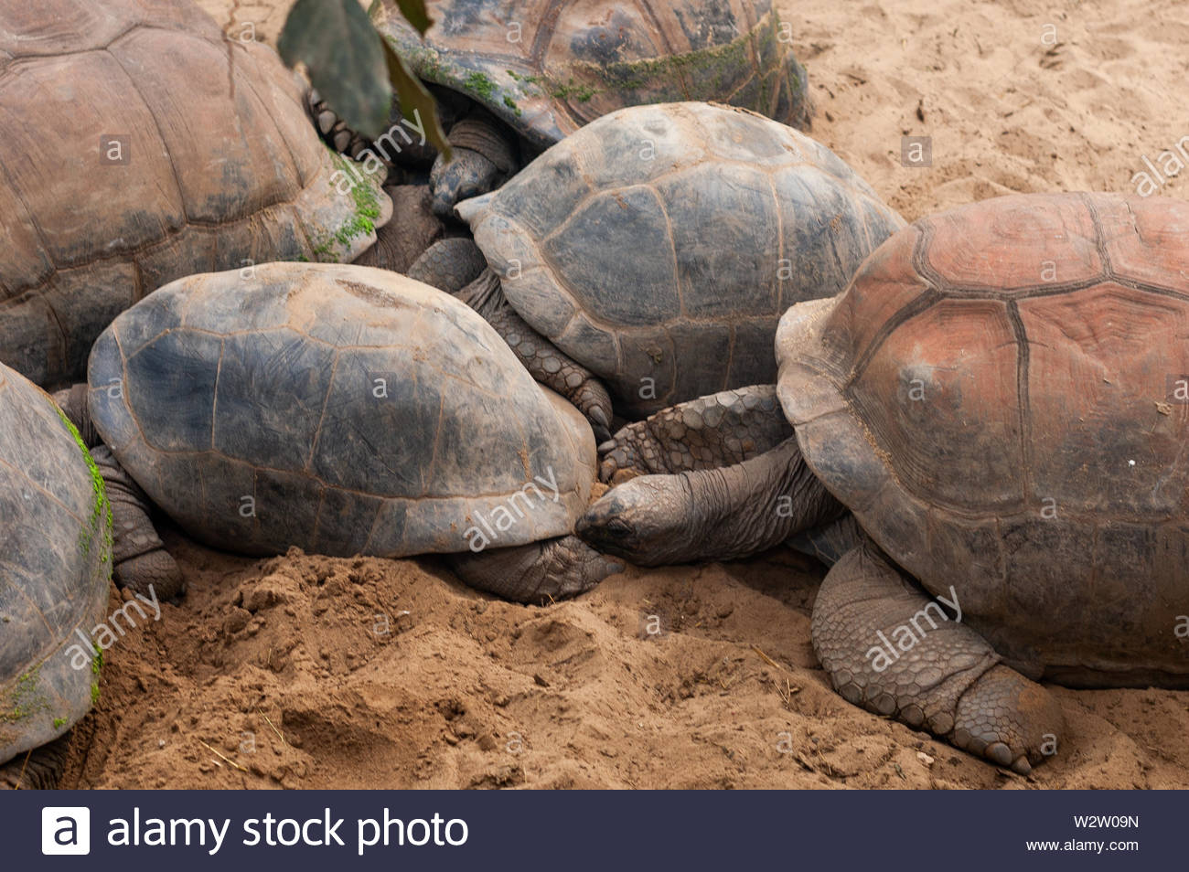 Valbrembo, Lombardia - 16.05.2019: Family of the turtles with two small turtles children in the zoo - Stock Image