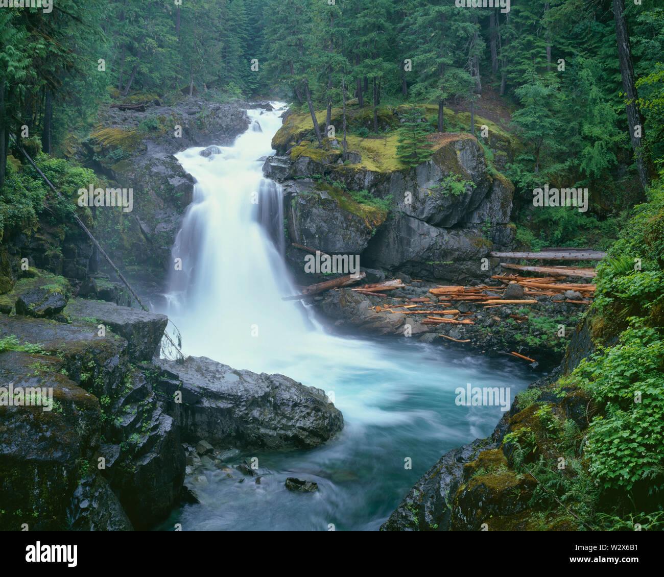USA, Washington, Mt. Rainier National Park, Silver Falls on the Ohanepecosh River. - Stock Image