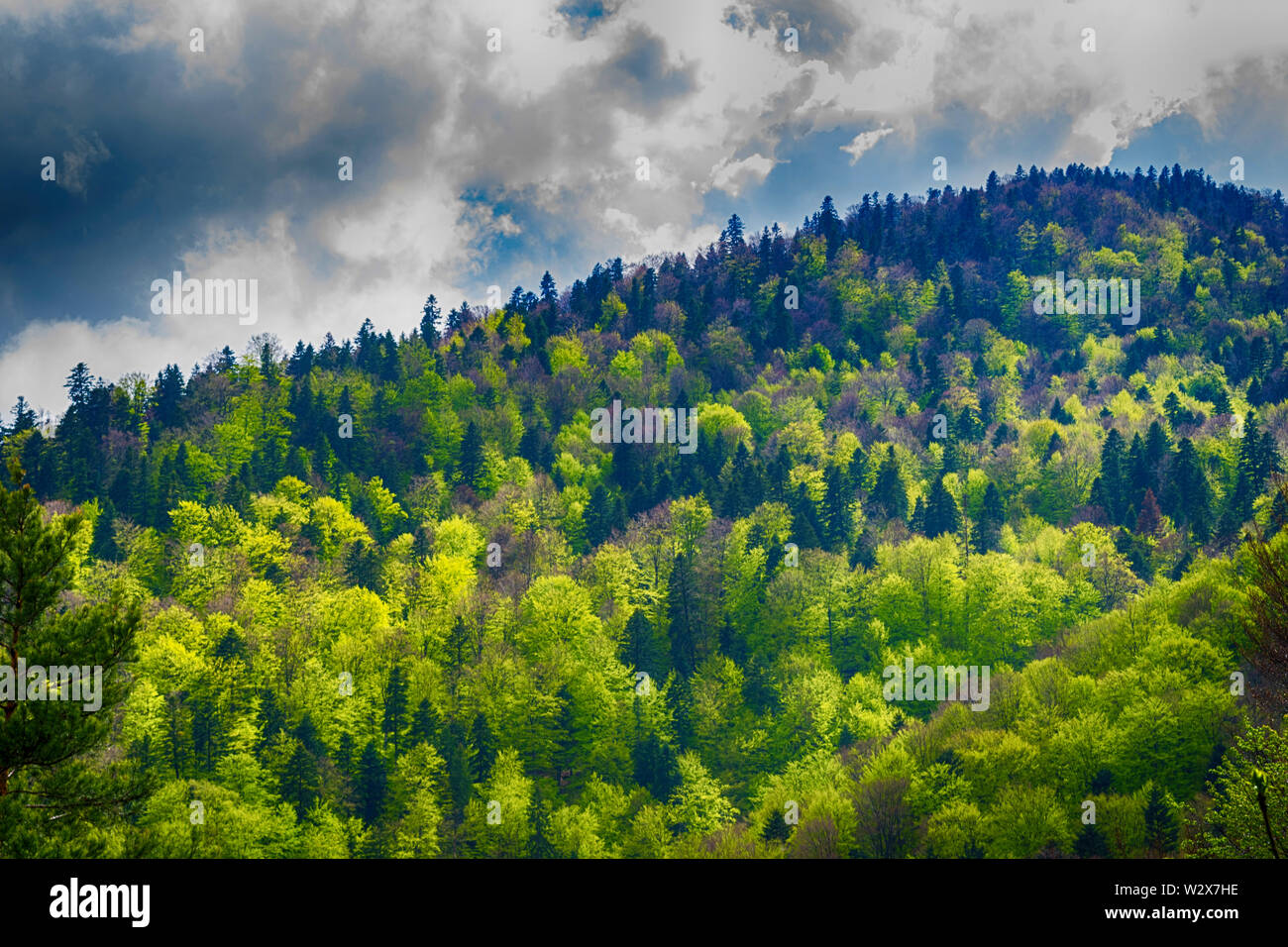 dramatic forest landscape. Hill covered with green trees with strong clouds in the sky. - Stock Image