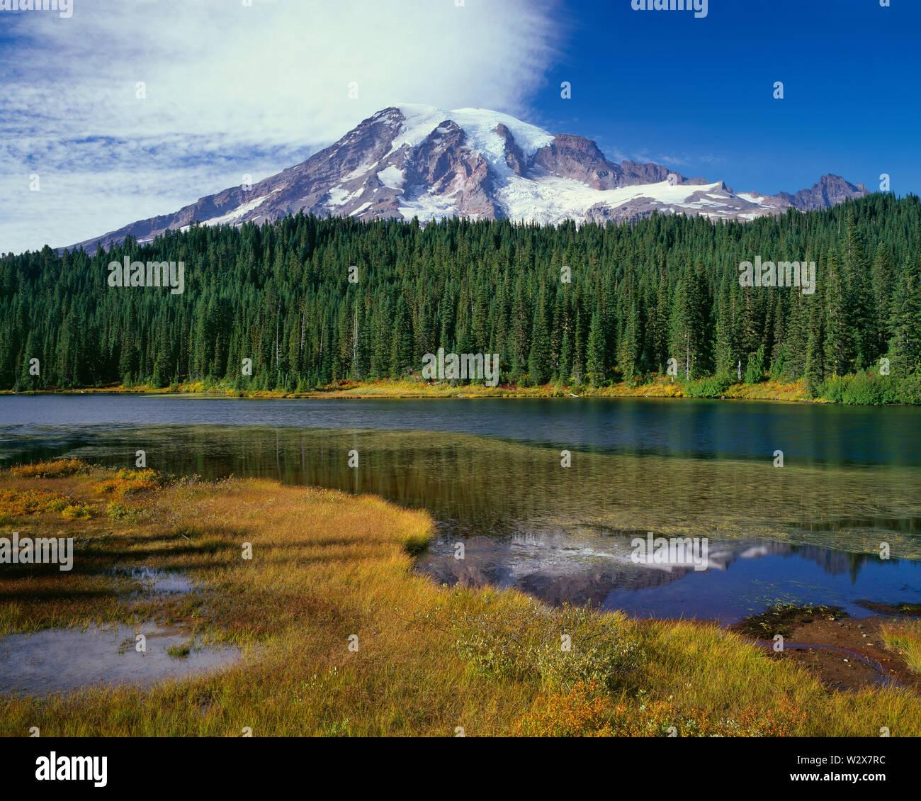 USA, Washington, Mt. Rainier National Park, Mt. Rainier and fall colored grass and shrubs along shore of Reflection Lake. - Stock Image