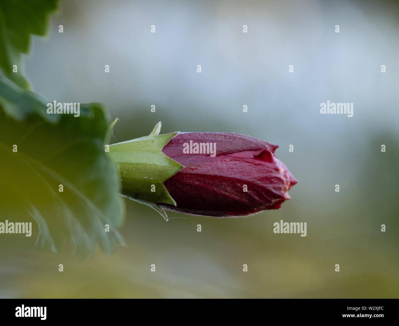 Sub Tropical Plants Plants Gardening Australia Australian High Resolution Stock Photography And Images Alamy