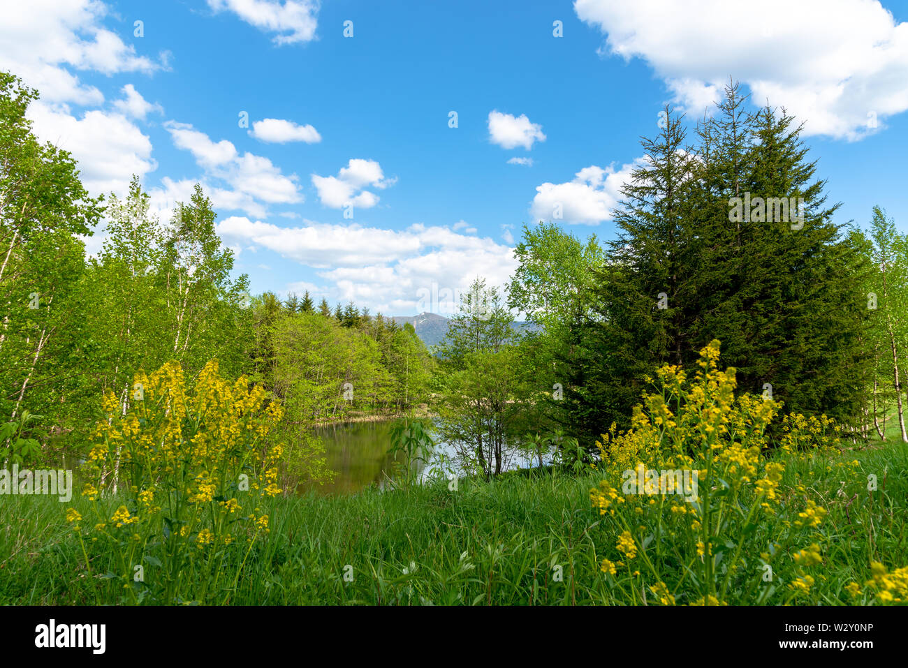 Beautiful forest mountain scenery at lakeside, nature landscape. Trees on foreground with mountains and blue sky on background in sunny day summer tim - Stock Image