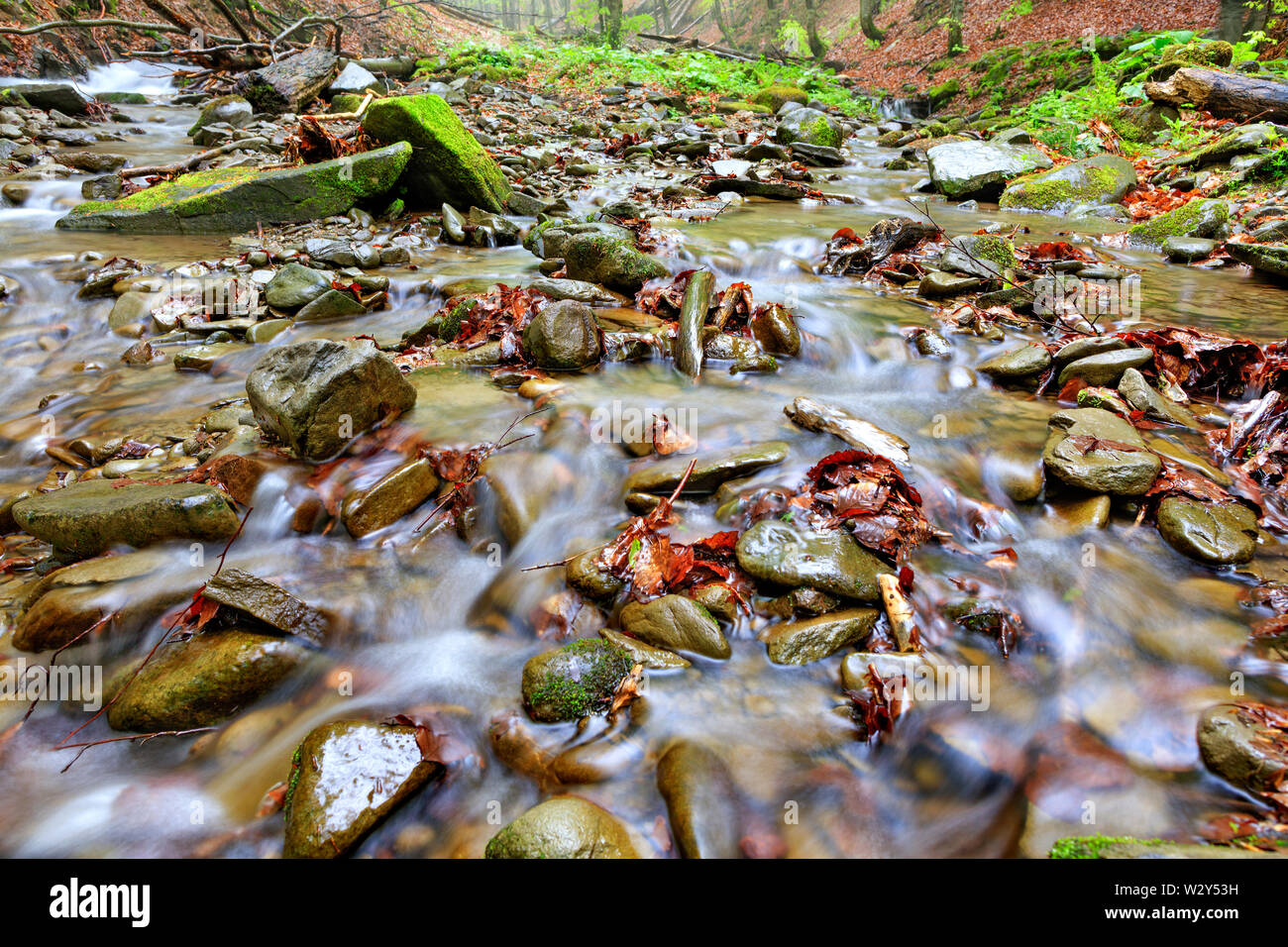 Fresh and clear waters of a forest stream run on stone pebbles and fallen leaves in the autumn forest. Low angle, foreground in light blur. - Stock Image