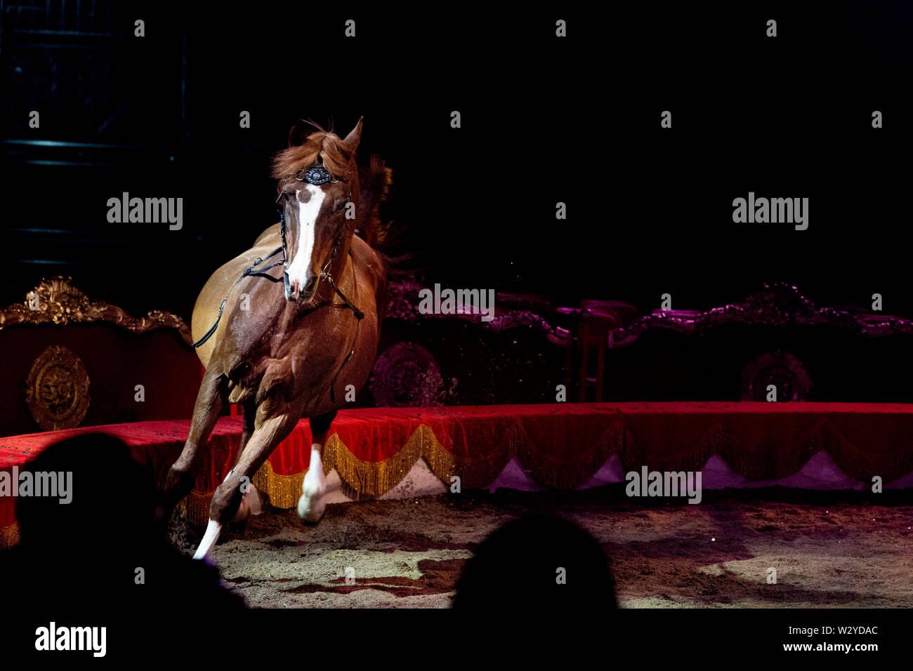 White circus horses on black background - Stock Image