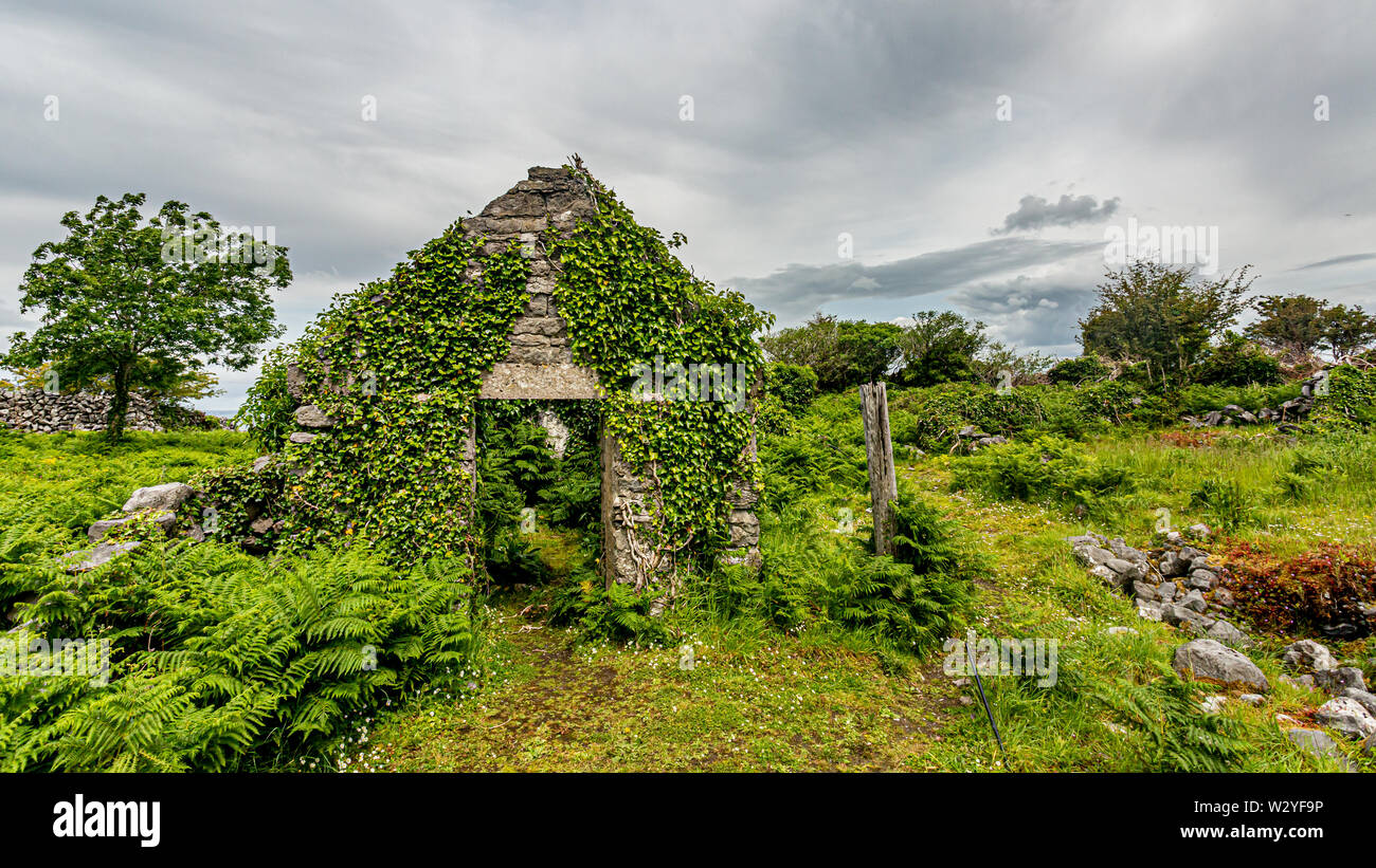 Facade of a ruined medieval house covered with plants in the middle of meadow in the Burren, geosite and geopark, Wild Atlantic Way, cloudy spring day - Stock Image