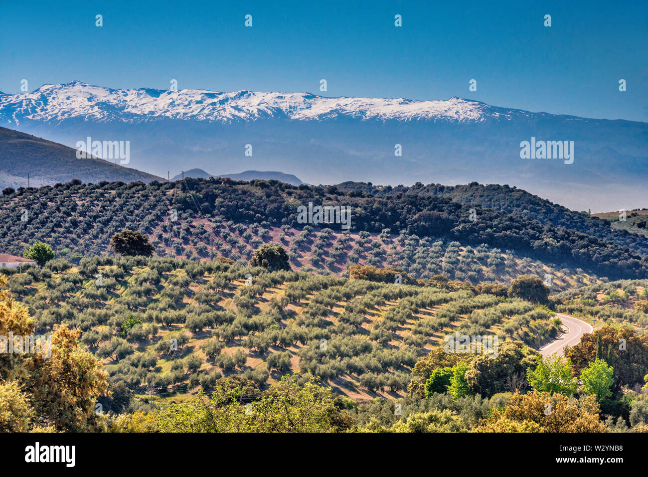 Sierra Nevada, seen in haze from 50 km away, over olive tree groves, from GR3410 road near town of Moclin, Granada province, Andalusia, Spain Stock Photo