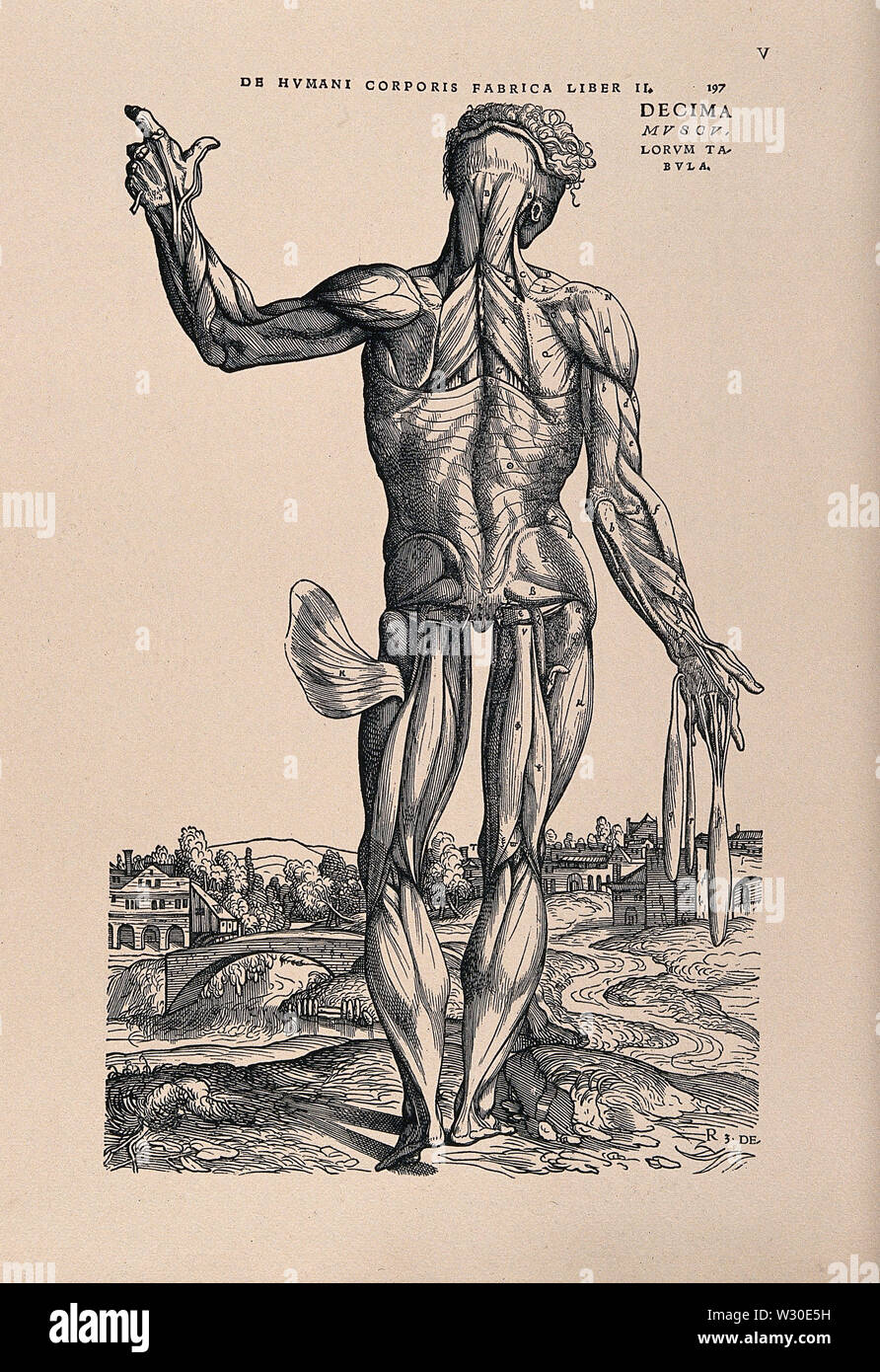 Muscle man, in a landscape, seen from the back. Photolithograph, 1940, after a woodcut, 1543. - Stock Image