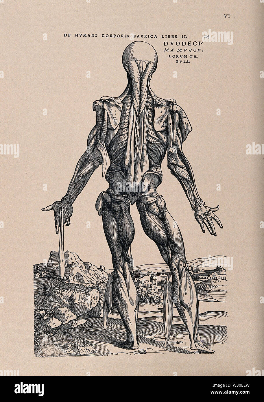 Muscleman, in a landscape, seen from behind. Photolithograph, 1940, after a woodcut, 1543. - Stock Image